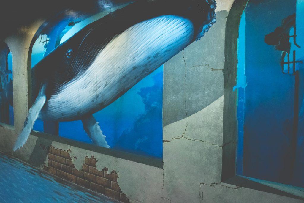 รูปภาพ 3 มิติของวาฬ